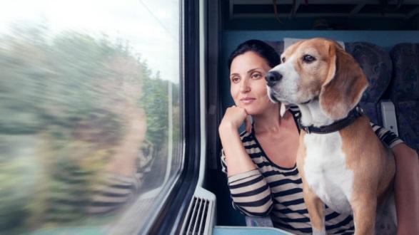 С 2018 года перевозить животных в поезде стало проще